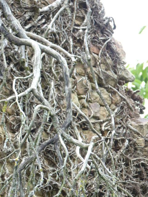 Pluneret_entrelacs de racines et branches mortes_129